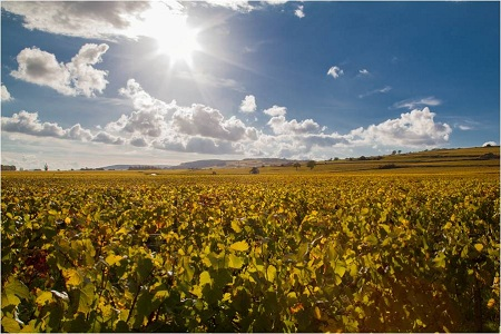 Vigne Bourgogne Chardonnay