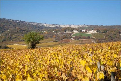 Vignes de Saint Romain blanc sous le chateau