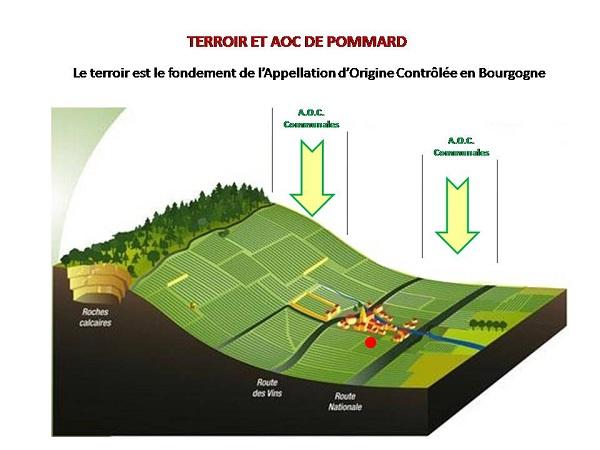 Découpe coteau Pommard Village